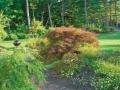 Planting Design, Swanzey NH